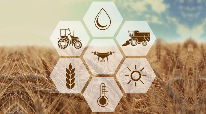 ¿En Qué Consiste El Régimen De Las Actividades Agrícolas, Ganaderas, Silvícolas y Pesqueras (Sector Primario) Personas Físicas?